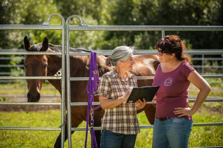 Beratung bei Pferdetransport